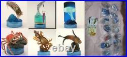 Kaiyodo New Enoshima Aquarium 2 Full Complete 14 species set NEW From Japan